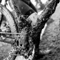 Guide: 2016 British Cycling National Cyclo-cross Championships